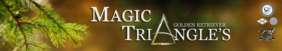 Magic Triangles